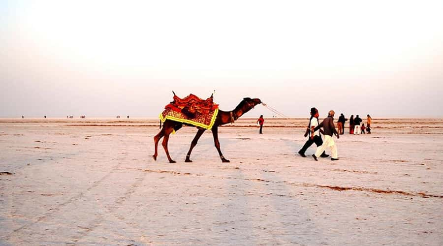 Camel Safari on the Rann