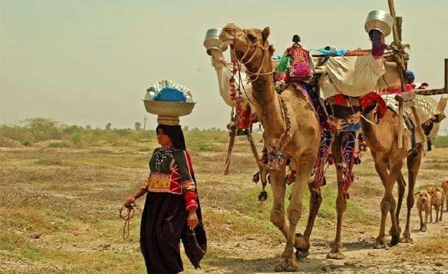 Rabari Tribe